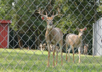 chain link deer fence