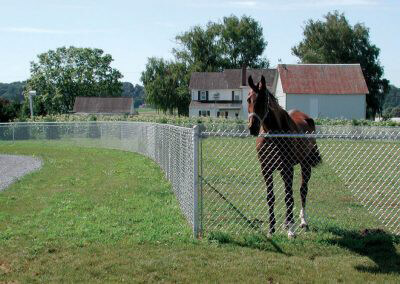 chain link fence around a horse pasture